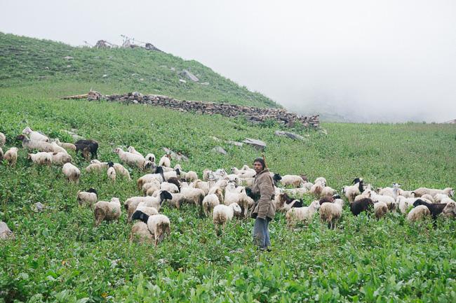 Karthika Gupta Travel Portraits Shepard in the Himalayas