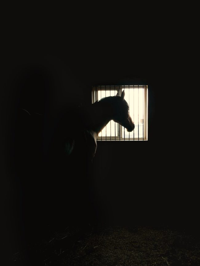 Horse inside a barn stall with dramatic backligh Karthika Gupta