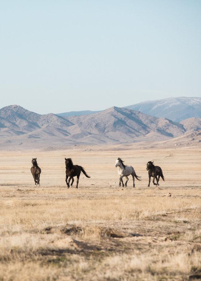 Travel to Utah to photograph wild horses