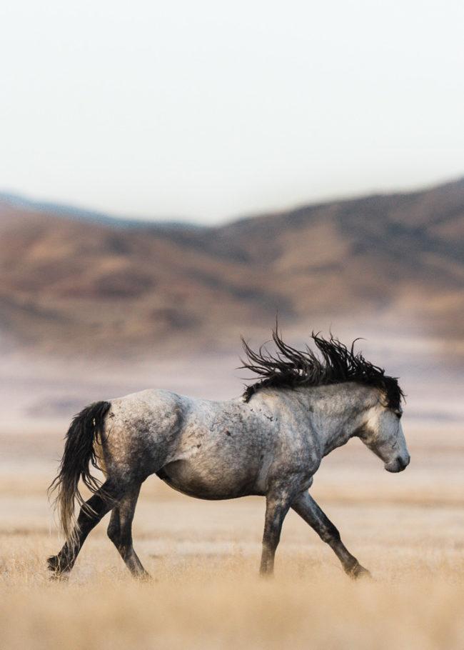 Photographing wild horses in Utah