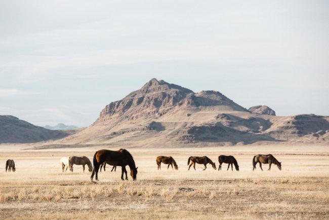 Karthika Gupta - Photographing Wild Horses in Utah