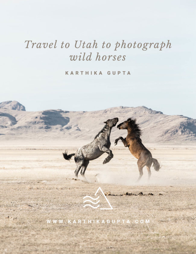 Tips to photograph wild horses in Utah